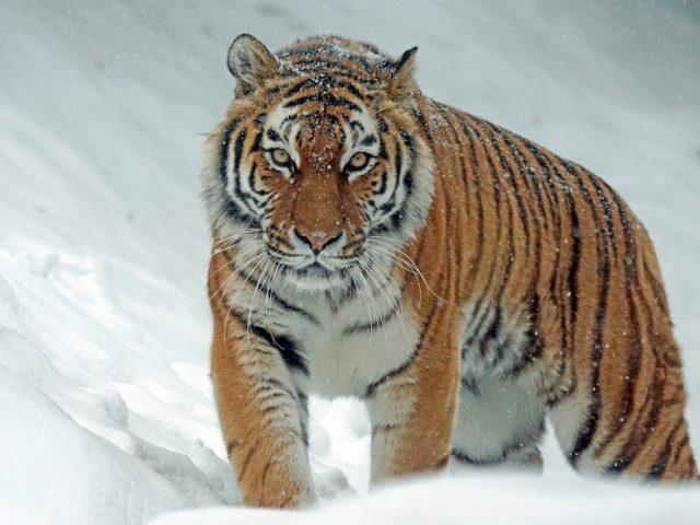 Pourquoi choisir des bijoux œil de tigre ?